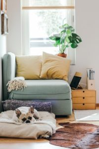 picture of a couch and a French bull dog - article about How Millennials Will Balance Off the Real Estate Market in New York in 2019 - Best Staten Island real estate attorney best New York real estate lawyer Staten Island real estate law firm New York real estate trends
