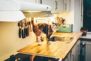 cat standing on kitchen counter - Best Apps to Help Streamline Your Home Renovations in Staten island written by Staten Island real estate lawyer