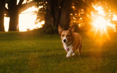 My Favorite Dog – Friendly Parks in Staten Island