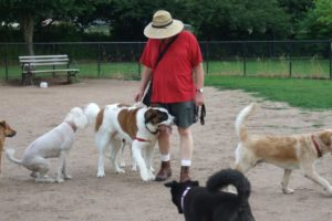 dog parks in Staten Island - New York real estate lawyer New York real estate attorney Staten island real estate lawyer